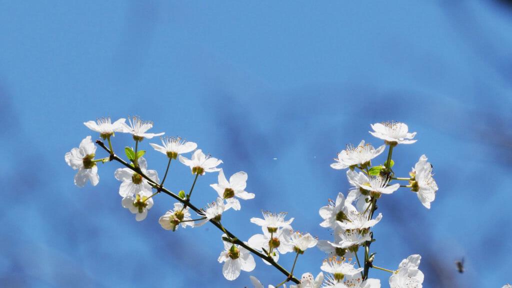 フラワーエッセンス・ヒーリング Seeds of Angelica
