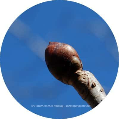 circle-image-red_chestnut_20130311_400