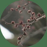 circle-image_elm7_200