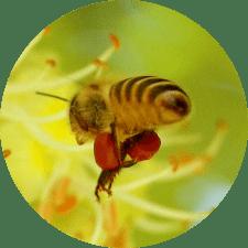 flying-bee-s