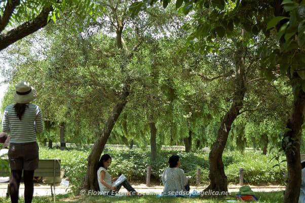 長居植物園(2015/5/30)