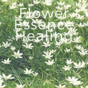 flower_essence_healing