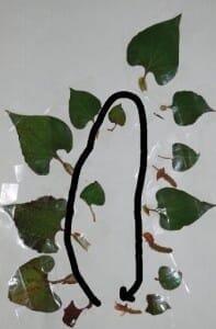 ドクダミの葉の配列