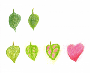 leaves and heart