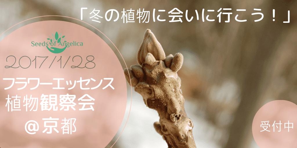 「冬の植物に会いに行こう!」観察会@京都府立植物園
