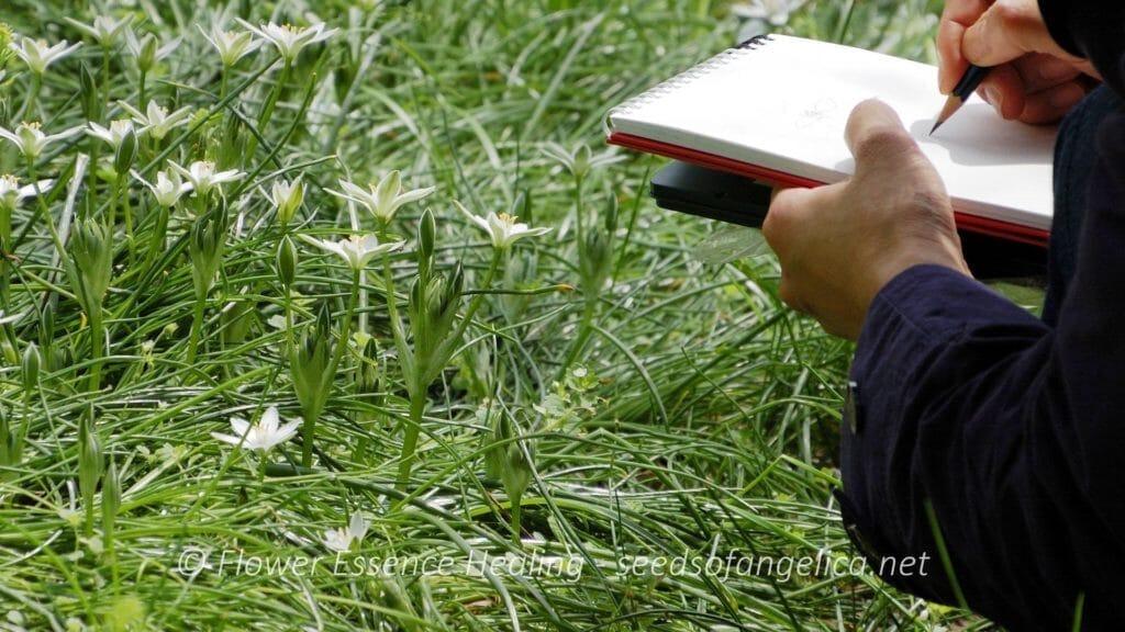 植物観察会
