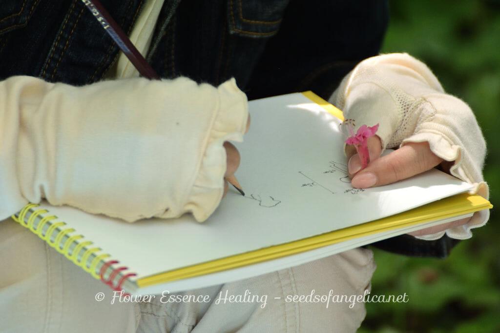 ゴールデンウィーク終盤の2日間、フラワーエッセンス関連の植物観察会を開催しました。5月6日は大阪市立長居植物園でホワイトチェスナットの、5月7日は京都府立植物園でレッドチェスナットの観察会でした。 これを機会に、フラワーエッセンスの植物観察会について少し書いてみようと思います。その前にまず写真から。