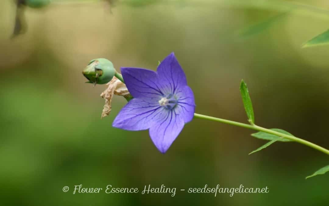 起っていることは種子が芽吹くための環境だとしたら