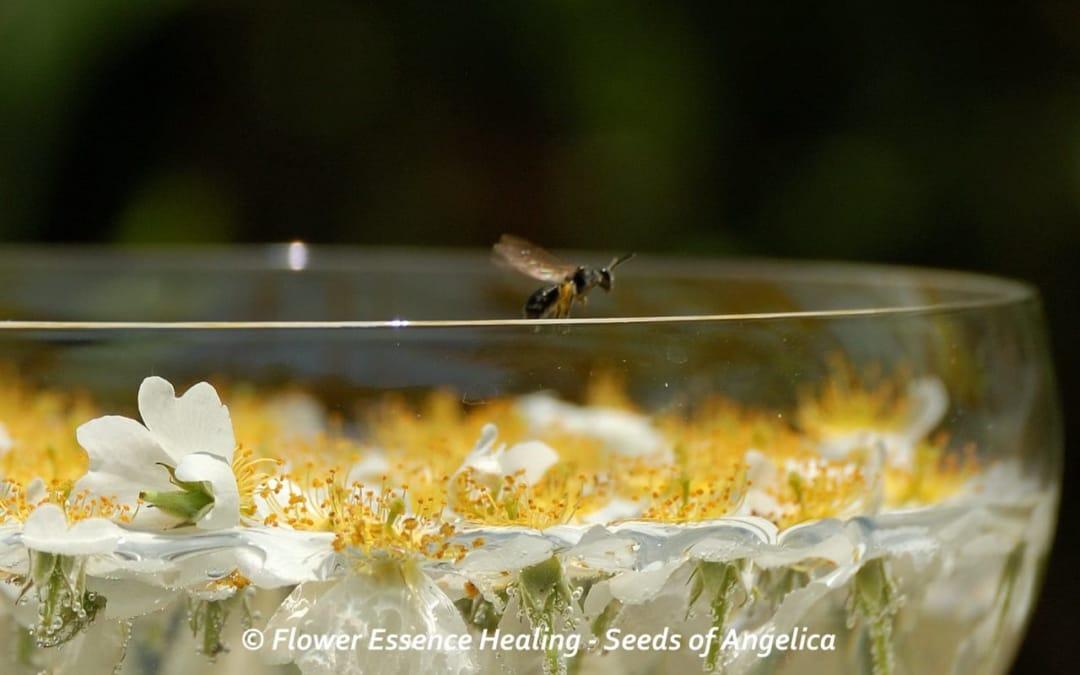 フラワーエッセンス・・・植物の世界と人間のこころが触れ合うところ-2