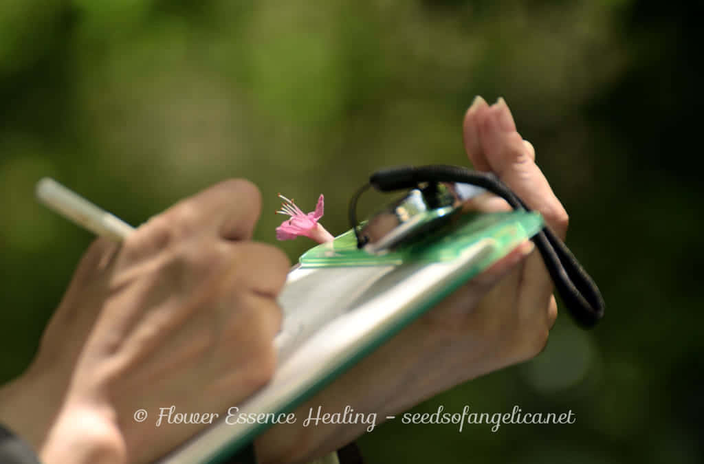 フラワーエッセンスの植物観察を通して体験すること(1)