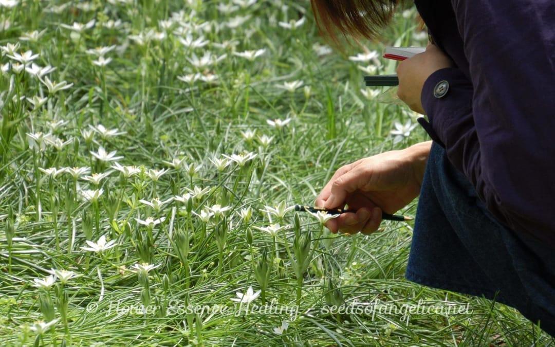 フラワーエッセンスの植物観察を通して体験すること(3)