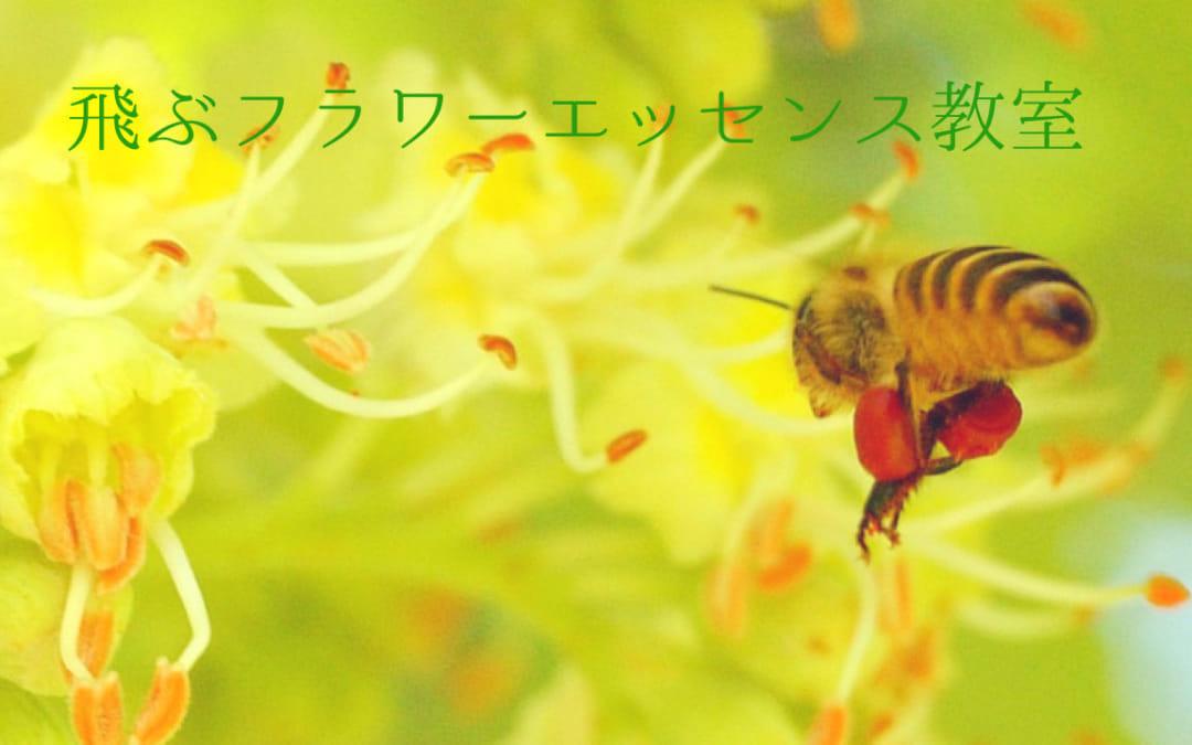 体験型フラワーエッセンス基礎講座・トライアルレッスン 5/24~