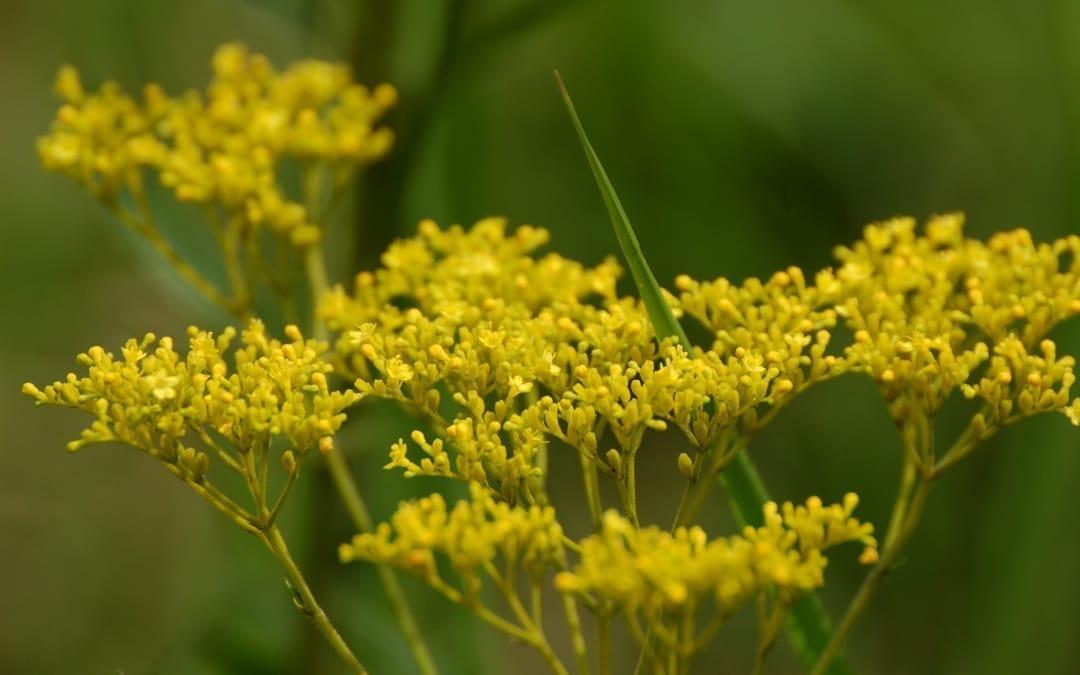 植物観察と真(まこと)の名 – その3:植物の真の名と「エッセンス」