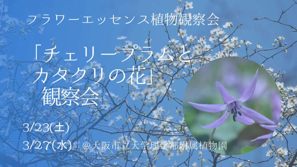 チェリープラムとカタクリの花観察会