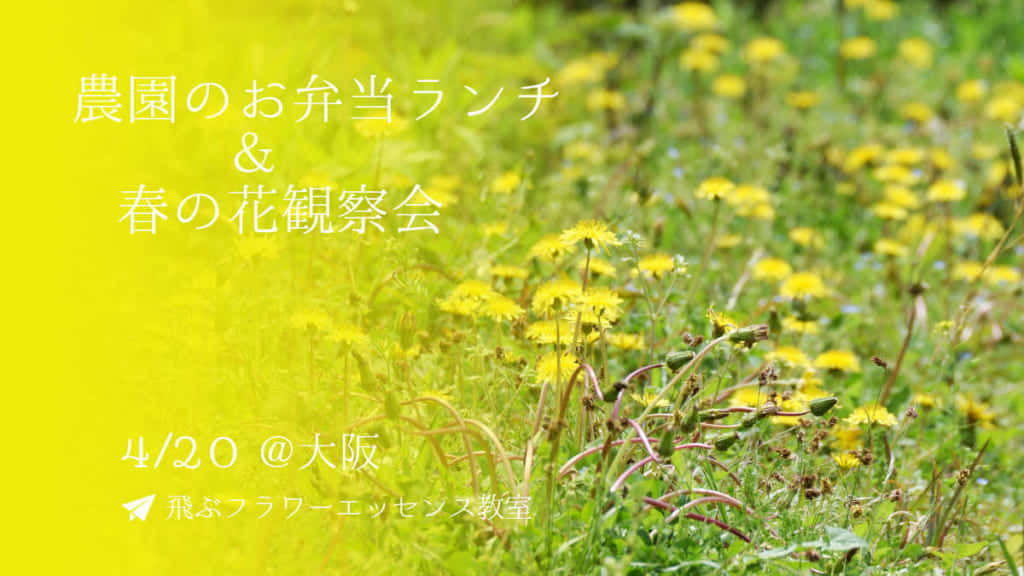 農園のお弁当ランチ&春の花観察会