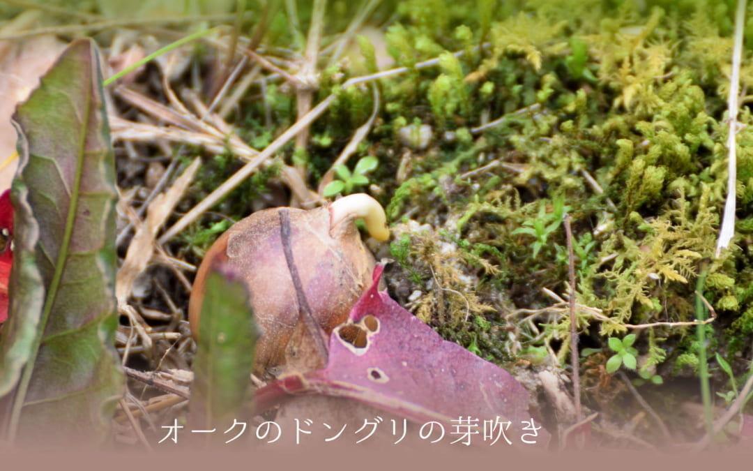 「チェリープラムとカタクリの花」植物観察会の感想