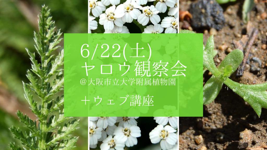 ヤロウ観察会+ウェブ講座