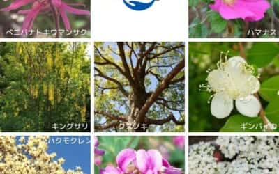 時間をかけて植物を観察すること