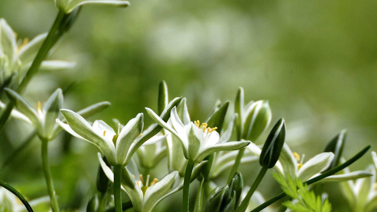 フラワーエッセンス Seeds of Angelica