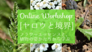 フラワーエッセンス・オンライン講座「ヤロウと境界」