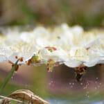 フラワーエッセンスは花の波動を水に転写したもの?