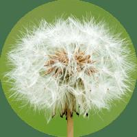 可能性の種子を見つける
