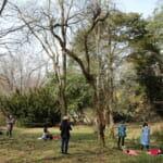 バッチフラワーレメディーの植物が観察できる植物園【まとめ】